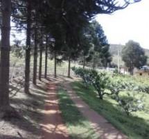 Fazenda/Sitio em Santo Antonio do Pinhal Ref : 1259