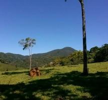 Terreno em Santo Antonio do Pinhal Ref :1268
